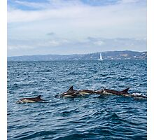 Dolphins and Sail Boats Photographic Print