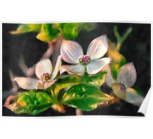 Dogwood Blossoms On A Branch Poster