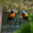 Parrots Leith Park Victoria 20160101 6555   by Fred Mitchell