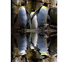 King Penguin, Antarctic, Montreal Biodome Photographic Print