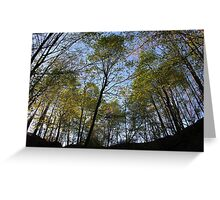 trees from below Greeting Card