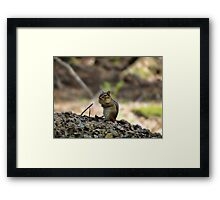 Who said they saw a chipmunk? Framed Print