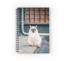 Cat, Adso, Temple Spiral Notebook