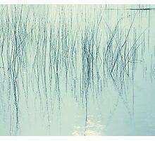 Whisps Photographic Print