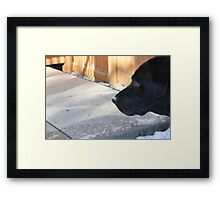 Black Lab In The Snow Framed Print