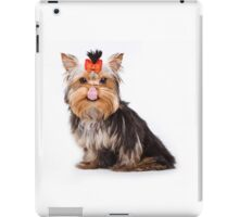 Funny shaggy dog puppy Yorkshire Terrier iPad Case/Skin