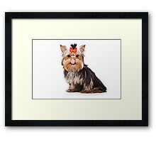 Funny shaggy dog puppy Yorkshire Terrier Framed Print