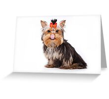 Funny shaggy dog puppy Yorkshire Terrier Greeting Card
