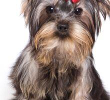 Funny shaggy dog puppy Yorkshire Terrier Sticker