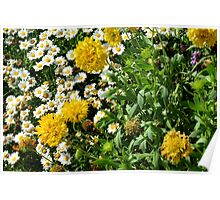 Yellow and small white flowers in the green bush. Poster