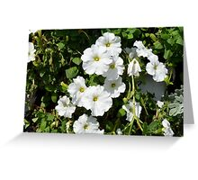 White calm flowers in the garden. Greeting Card