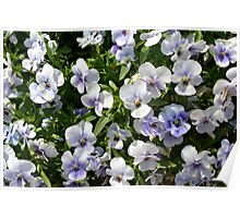 Beautiful small white purple flowers in the green bush. Poster