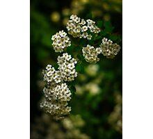 Flower stream Photographic Print