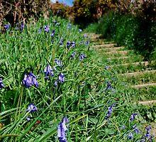 Cornish Blue Bells by Margaret Brown