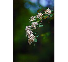 White flower stream Photographic Print