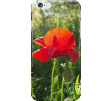 Wild red poppy flower iPhone Case/Skin