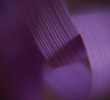 CLOSEUP OF LAVENDER RIBBON by scarletjames