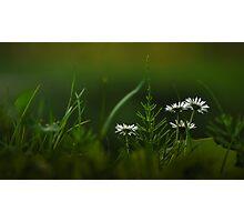 Nature wonder Photographic Print