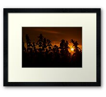 beautiful sunset through the wild nettles Framed Print