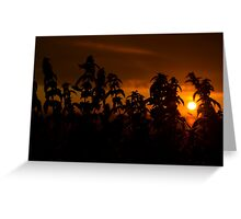 beautiful sunset through the wild nettles Greeting Card