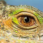 Colourful Legavaan Eye by Shaun Colin Bell
