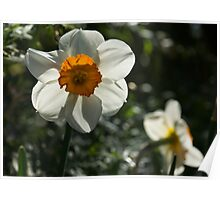 Spring Sunshine and Blooms Poster