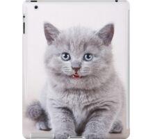 Charming fluffy kitten British cat iPad Case/Skin