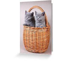 Charming fluffy kitten British cat Greeting Card