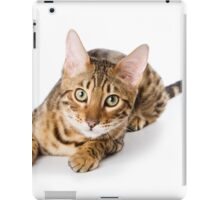 Charming fluffy kitten Abyssinian iPad Case/Skin