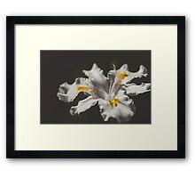 White Iris 4 Framed Print