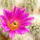 Desert Beauty by Bill Morgenstern