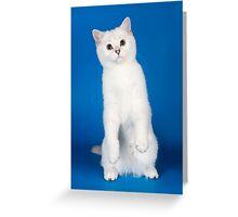 Charming cute white fluffy kitten cat Greeting Card