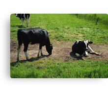 Cow outdoors in the meadow Canvas Print
