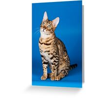 Charming cute red fluffy kitten Abyssinian cat Greeting Card