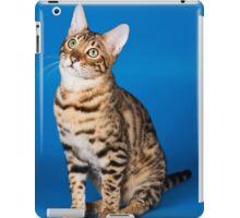 Charming cute red fluffy kitten Abyssinian cat iPad Case/Skin