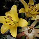 Beautiful Australian Native Wildflowers by judygal