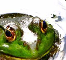Frog-weis-er Sticker