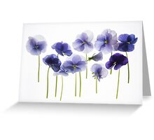 backlit pansy petals on a lightbox  Greeting Card