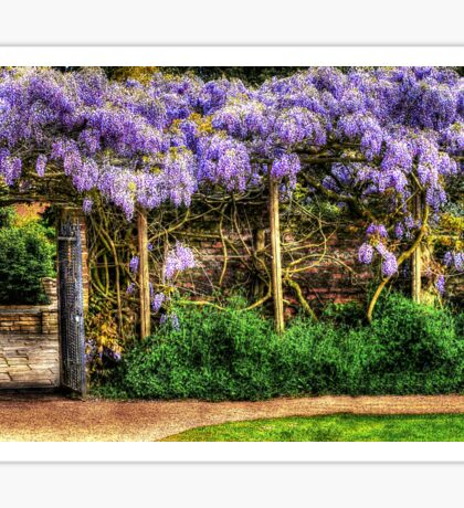 Wall of Wisteria HDR Sticker