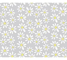 simple daisies on gray Photographic Print