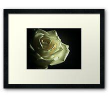 Simplistic Rose  Framed Print