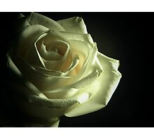 Simplistic Rose  Photographic Print