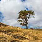 Highland Tree by Dave Hare