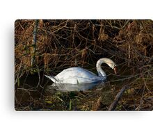 Swan on the River Ouse England UK Canvas Print