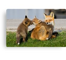 Red Fox Vixen and Two Kits Canvas Print
