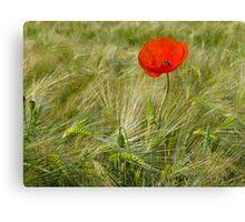 Red Poppy - Mohnblume 3 Canvas Print