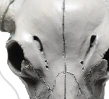 Cow Steer Skull , Photograph Sticker