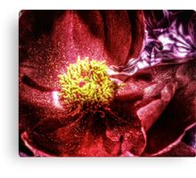 vivid red flower macro with pollen Canvas Print