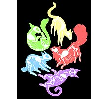 Creepy Kitties in Color Photographic Print