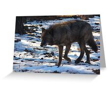 """Timber Wolf on the Prowl"" Greeting Card"